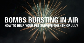 Bombs Bursting in Air – How to help your pet survive the 4th of July