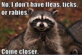 Where do fleas and ticks comefrom?