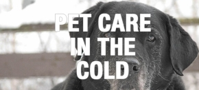 Caring for Older Dogs and Cats in Cold Weather, Part 1