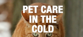 Caring for Older Dogs and Cats in Cold Weather, Part 2