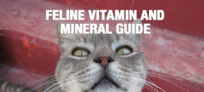 Feline Vitamin and Mineral Guide: What Your Cat Really Needs