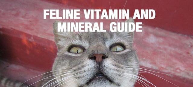 feline_vitamin