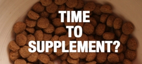 Supplement Guide for Dogs: Is There Something Missing?