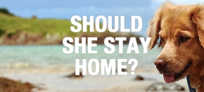 Travel with Pets: Should Pets Stay or Should They Go?
