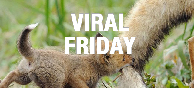 viral_friday