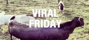 Viral Friday