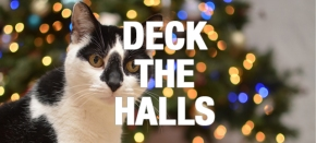 Deck the Halls: What Your Pet Wants You toKnow