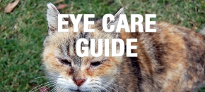 Eye Care Guide: How to Recognize WarningSigns