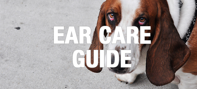 ear_care_guide