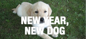 New Year, New Dog: How to Housetrain