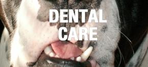 Dental Care: National Pet Dental HealthMonth