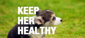 4 Health Tips for Your New Puppy