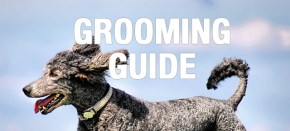 Grooming Guide: Outer Shine that Reflects InnerHealth