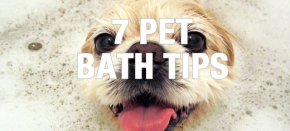 7 Pet Bath Tips to Save YouTime